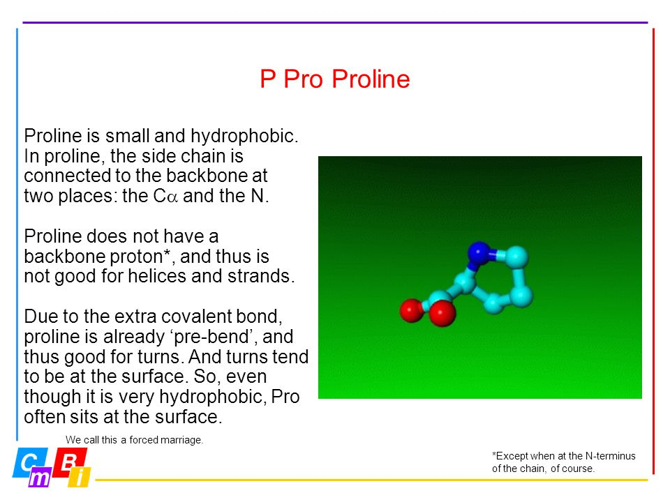 P Pro Proline Proline is small and hydrophobic. In proline, the side chain is. connected to the backbone at.