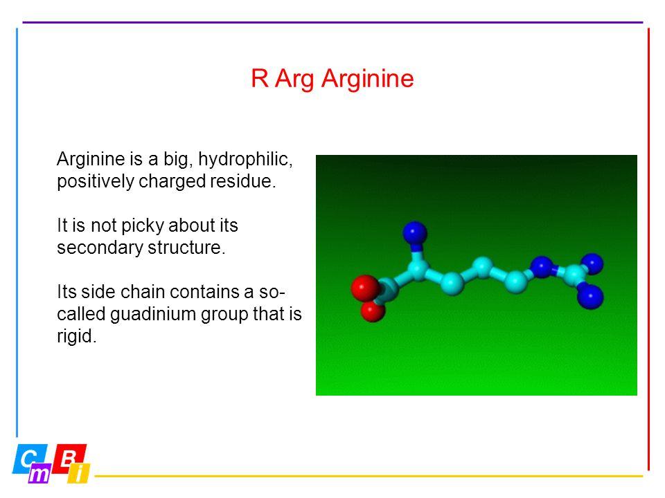 R Arg Arginine Arginine is a big, hydrophilic,