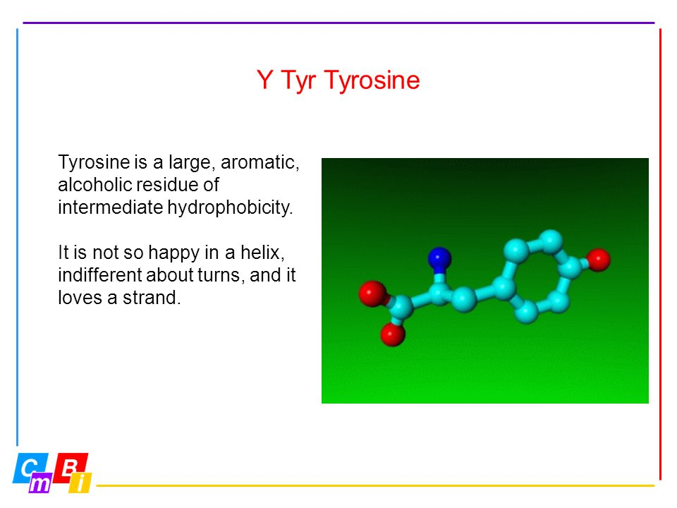 Y Tyr Tyrosine Tyrosine is a large, aromatic, alcoholic residue of