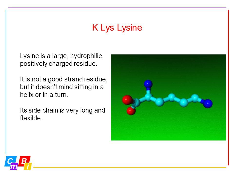K Lys Lysine Lysine is a large, hydrophilic,