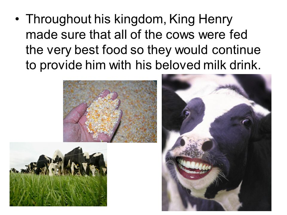 Throughout his kingdom, King Henry made sure that all of the cows were fed the very best food so they would continue to provide him with his beloved milk drink.
