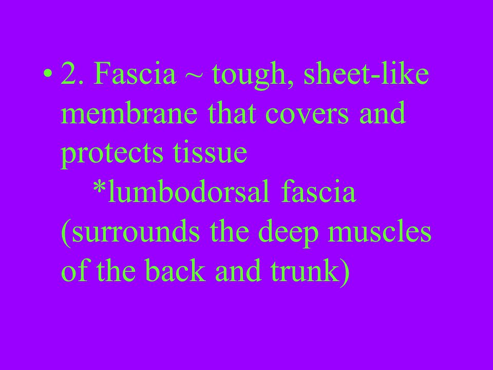 2. Fascia ~ tough, sheet-like membrane that covers and protects tissue