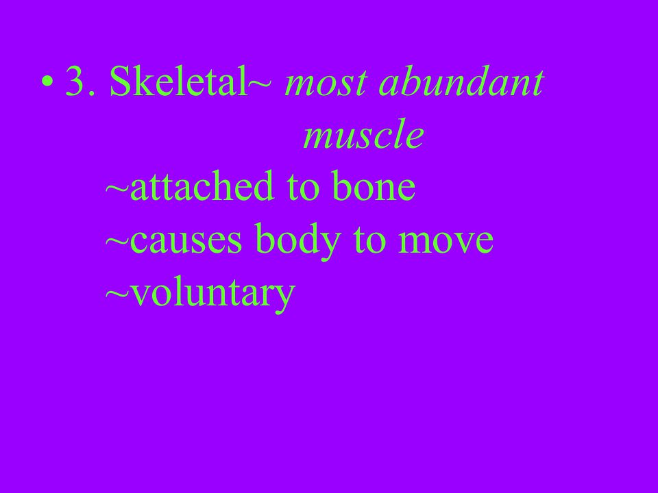 3. Skeletal~ most abundant. muscle. ~attached to bone