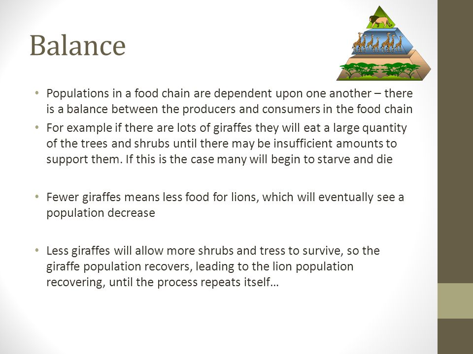 Balance Populations in a food chain are dependent upon one another – there is a balance between the producers and consumers in the food chain.