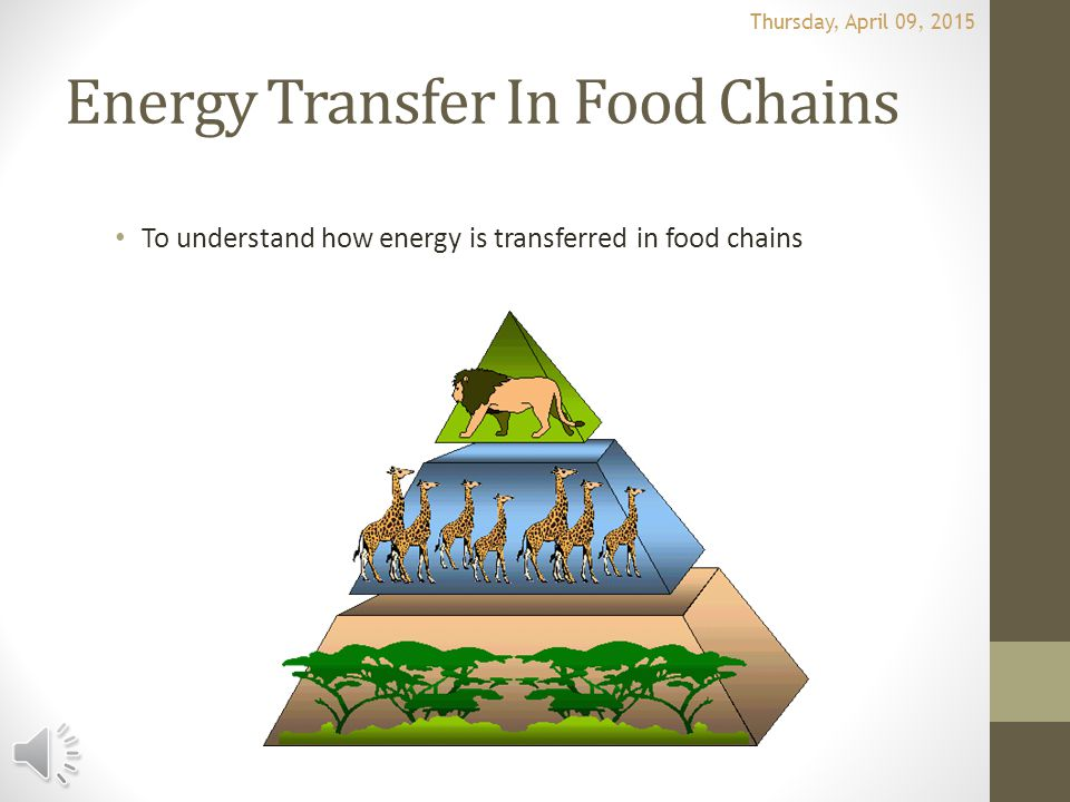 Energy Transfer In Food Chains