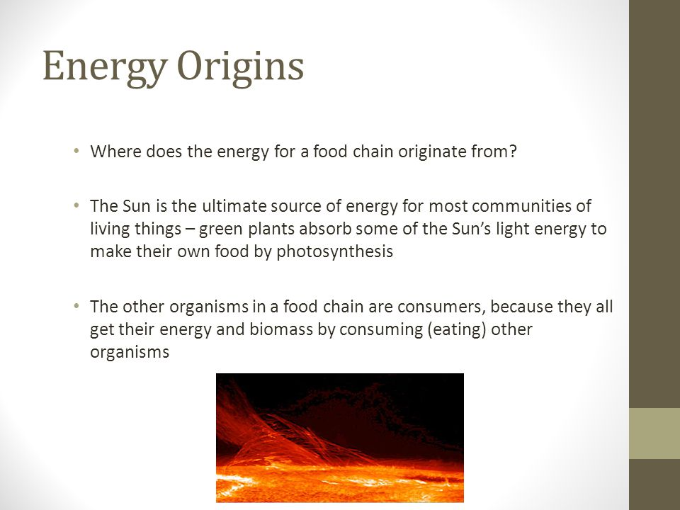 Energy Origins Where does the energy for a food chain originate from