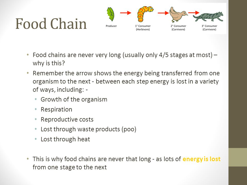 Food Chain Food chains are never very long (usually only 4/5 stages at most) – why is this