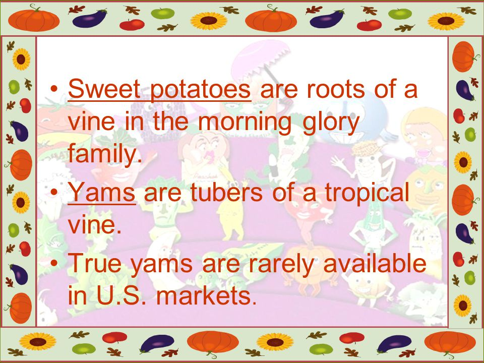 Sweet potatoes are roots of a vine in the morning glory family.