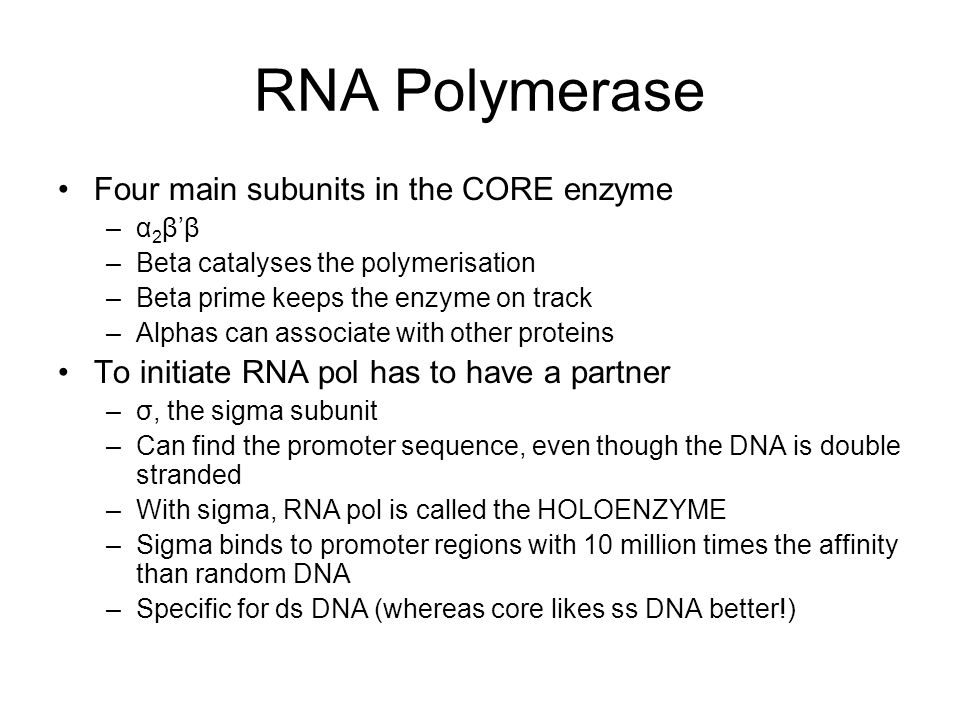 RNA Polymerase Four main subunits in the CORE enzyme