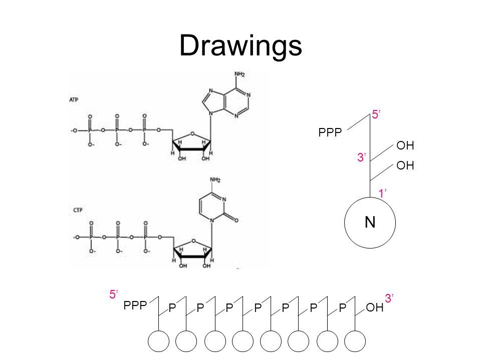 Drawings 5' PPP OH 3' OH 1' N 5' 3' PPP P P P P P P P OH