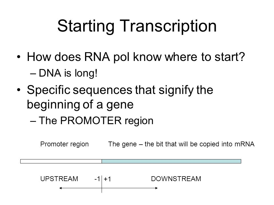 Starting Transcription