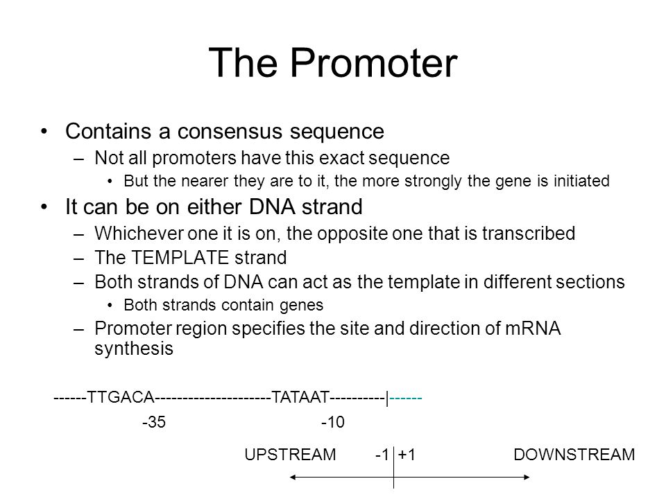 The Promoter Contains a consensus sequence