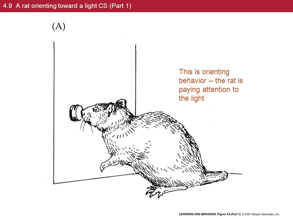 4.9 A rat orienting toward a light CS (Part 1)