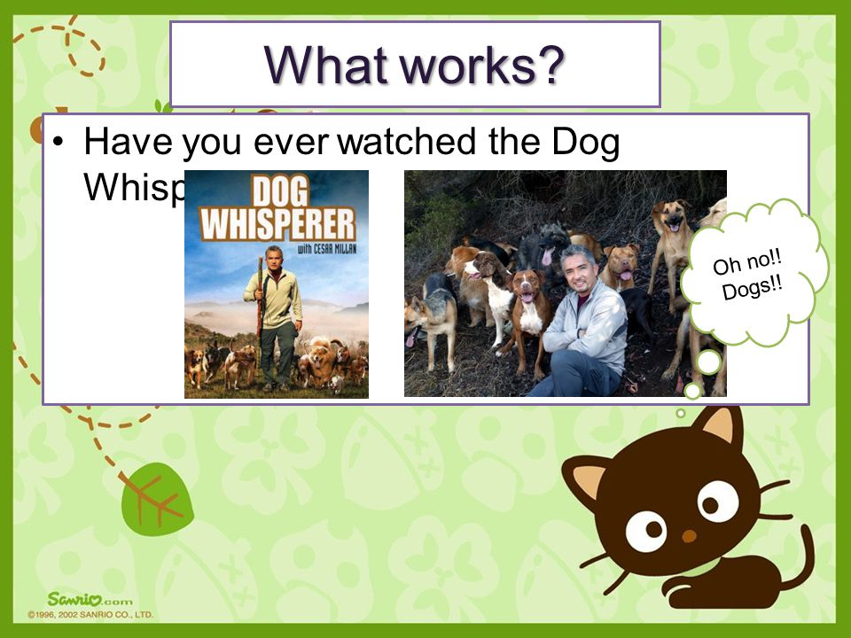 What works Have you ever watched the Dog Whisperer Oh no!! Dogs!!