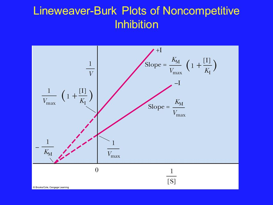 Lineweaver-Burk Plots of Noncompetitive Inhibition