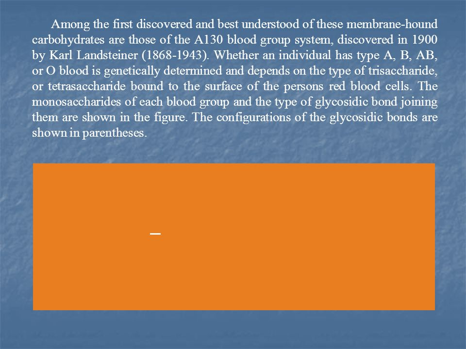 Among the first discovered and best understood of these membrane-hound carbohydrates are those of the A130 blood group system, discovered in 1900 by Karl Landsteiner (1868-1943).