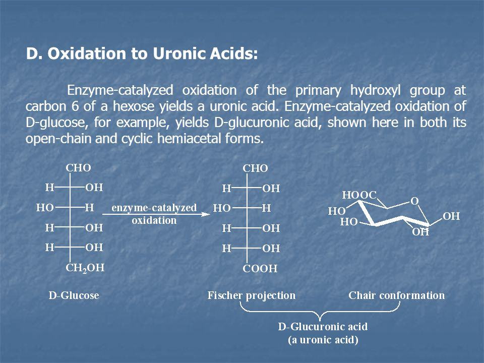 D. Oxidation to Uronic Acids: