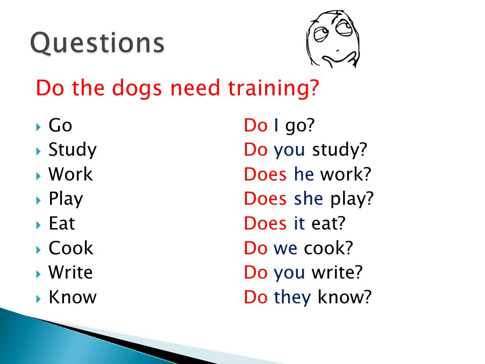 Questions Do the dogs need training Go Study Work Play Eat Cook Write