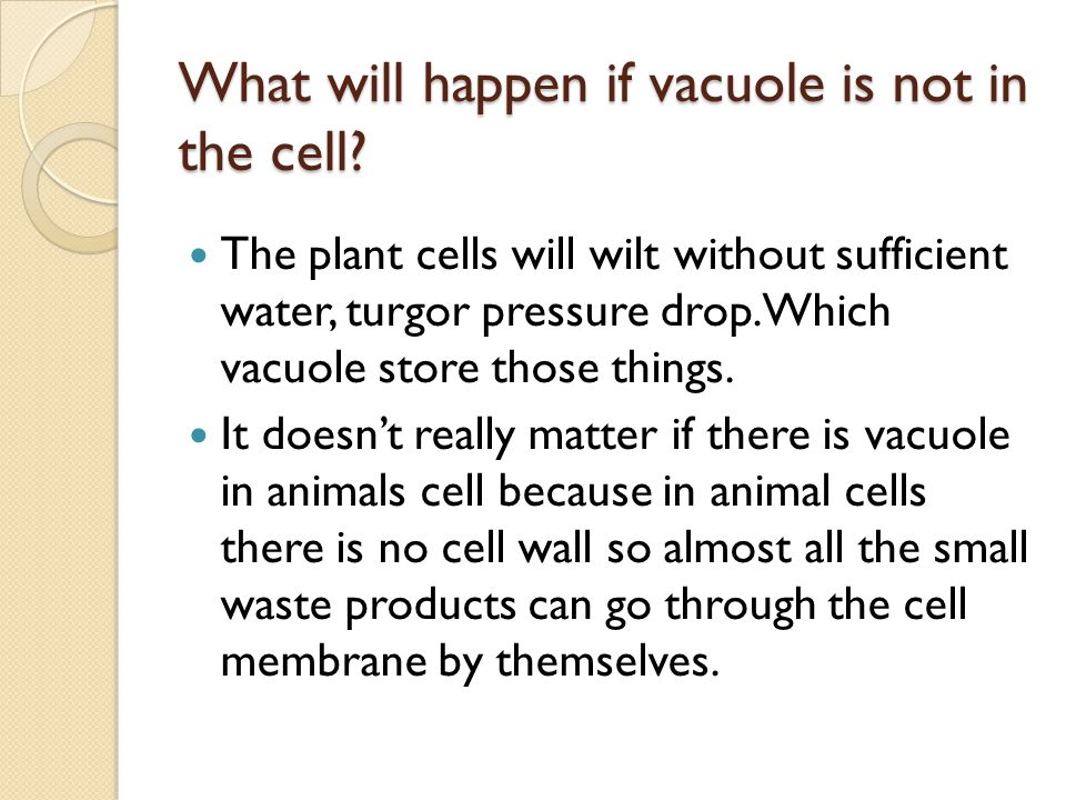 What will happen if vacuole is not in the cell