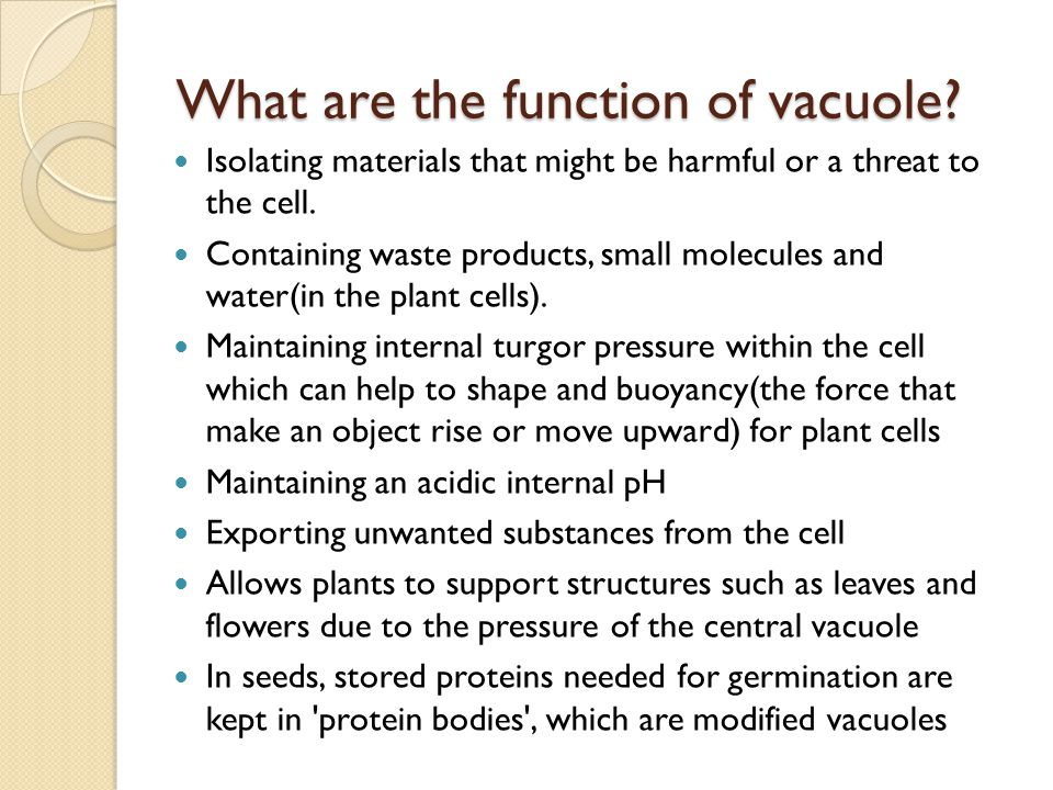 What are the function of vacuole
