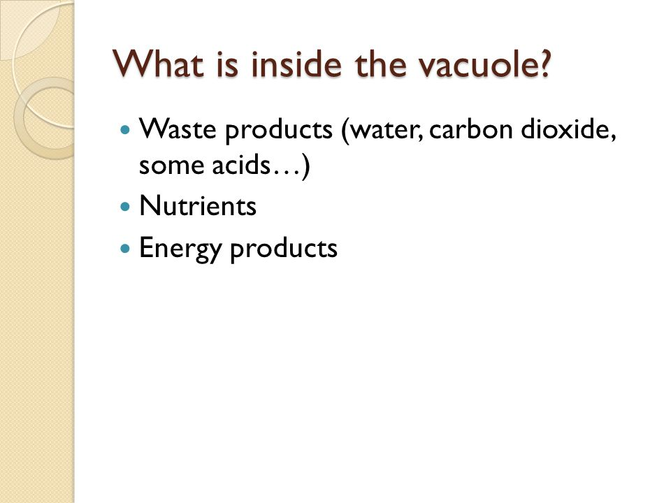 What is inside the vacuole