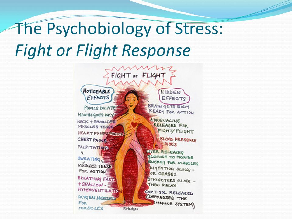 The Psychobiology of Stress: Fight or Flight Response