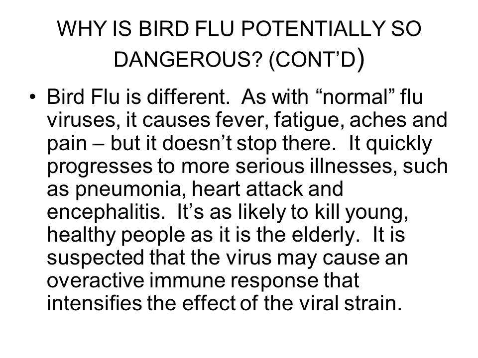 WHY IS BIRD FLU POTENTIALLY SO DANGEROUS (CONT'D)