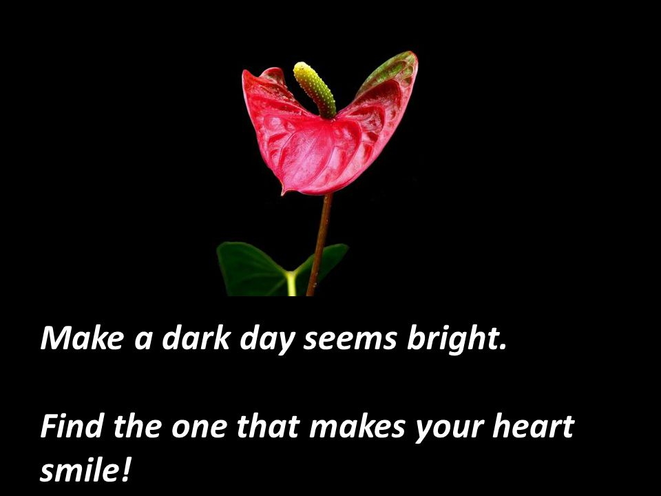 Make a dark day seems bright.