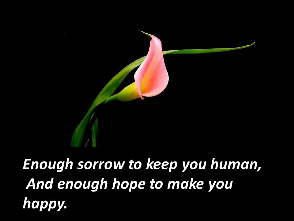Enough sorrow to keep you human,