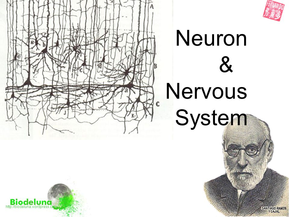 Neuron & Nervous System