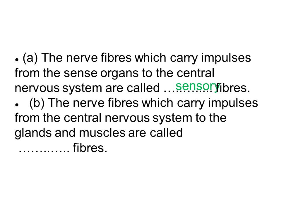 (a) The nerve fibres which carry impulses from the sense organs to the central nervous system are called …..…..... fibres.