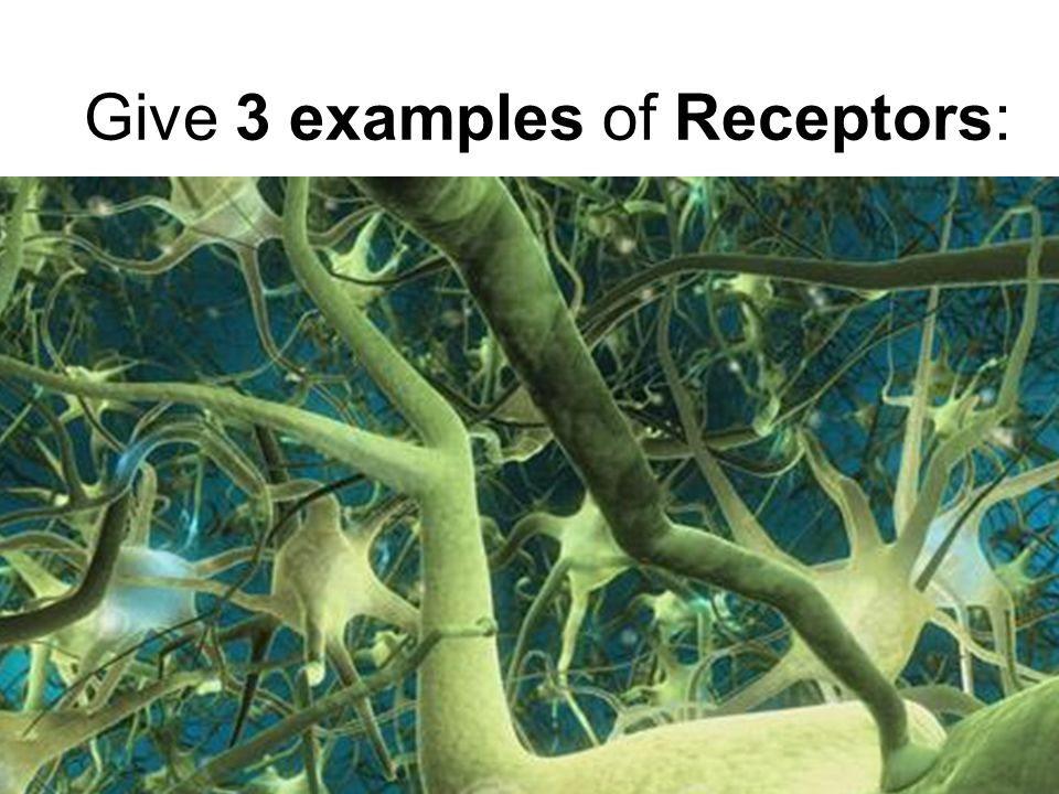 Give 3 examples of Receptors: