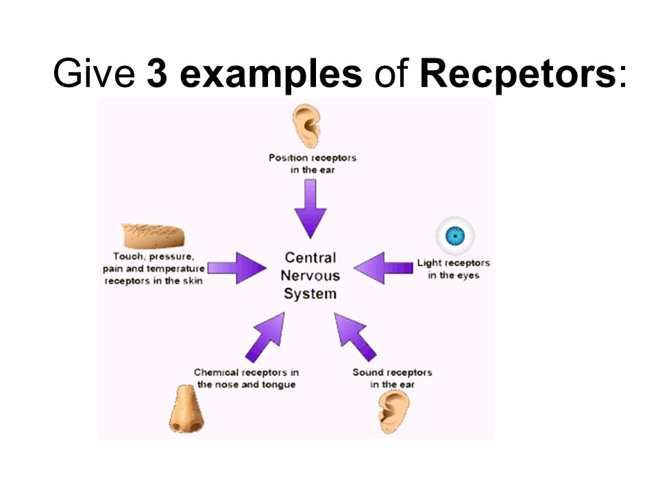 Give 3 examples of Recpetors: