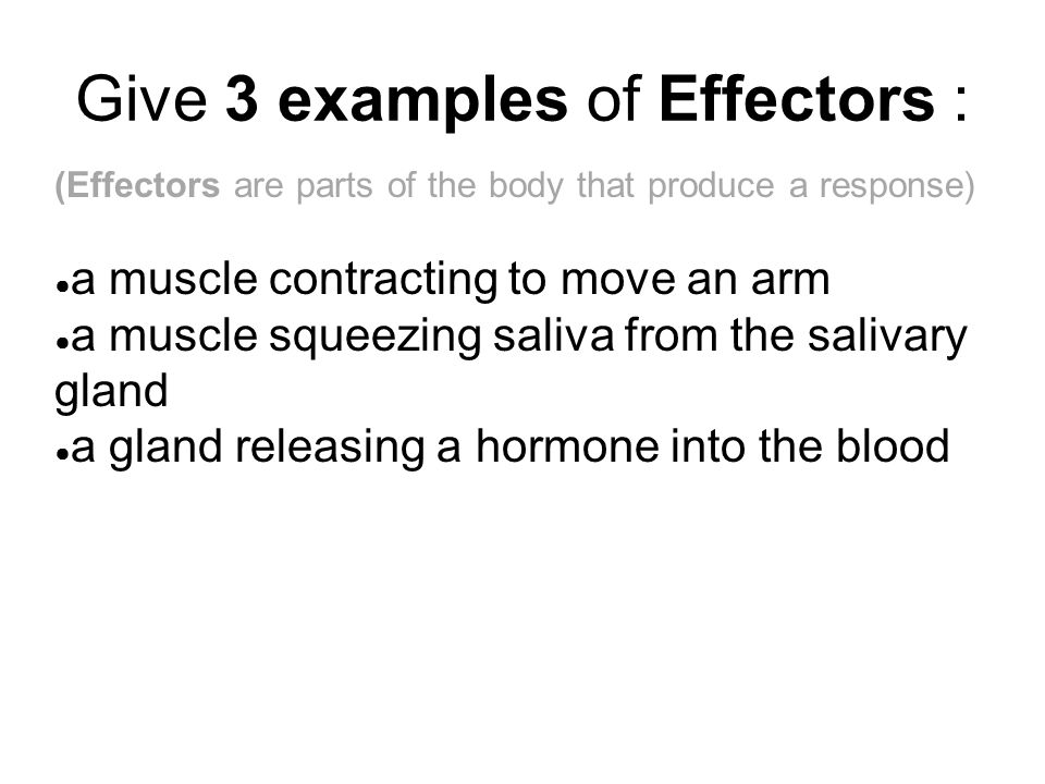 Give 3 examples of Effectors :