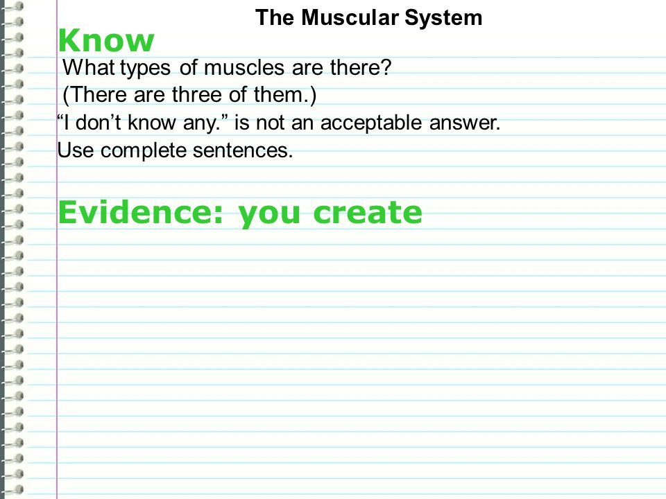 Know Evidence: you create The Muscular System