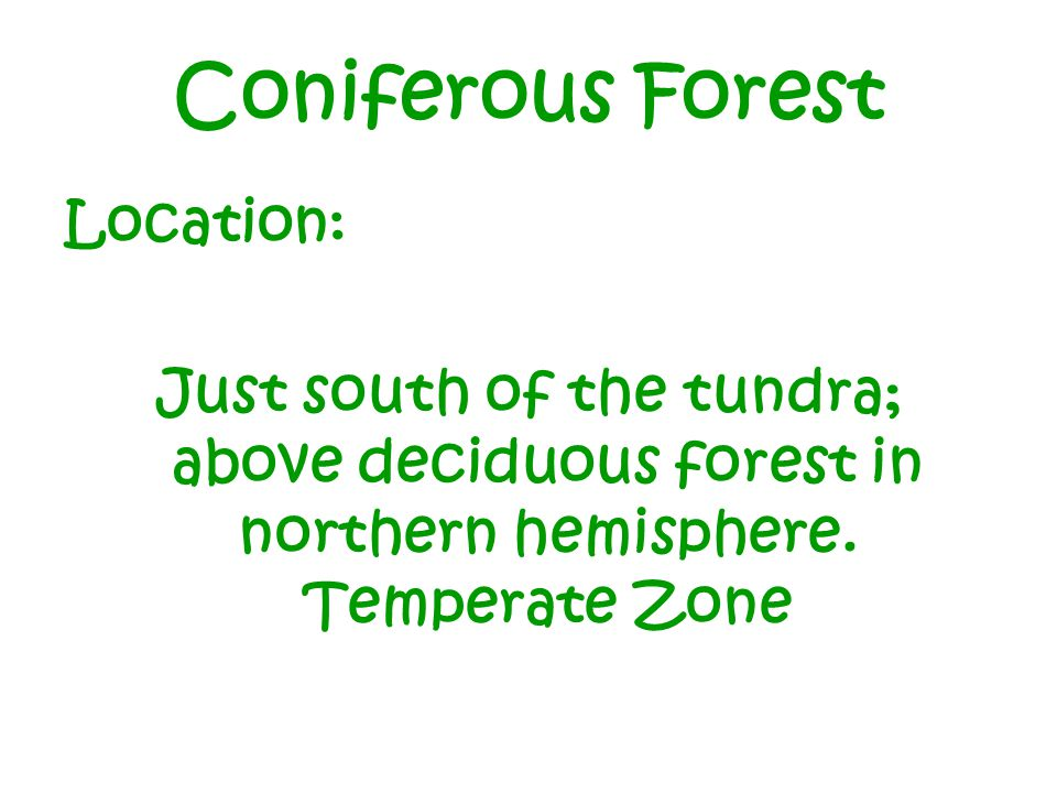 Coniferous Forest Location: