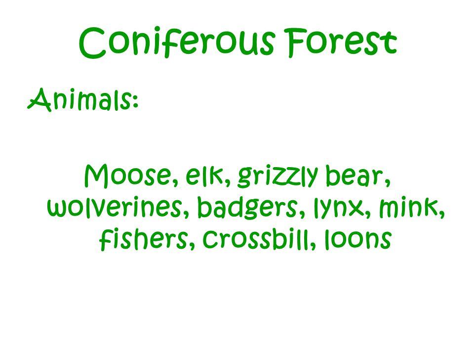 Coniferous Forest Animals: