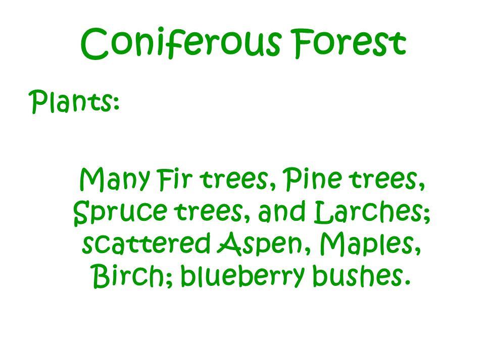 Coniferous Forest Plants: