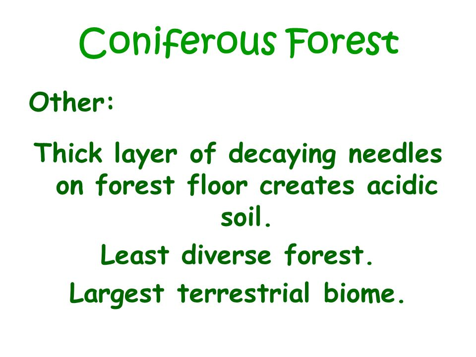 Coniferous Forest Other: