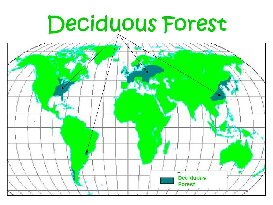 Deciduous Forest Deciduous Forest