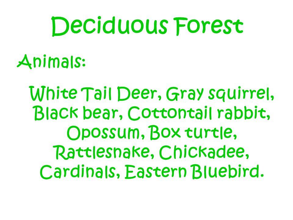 Deciduous Forest Animals: