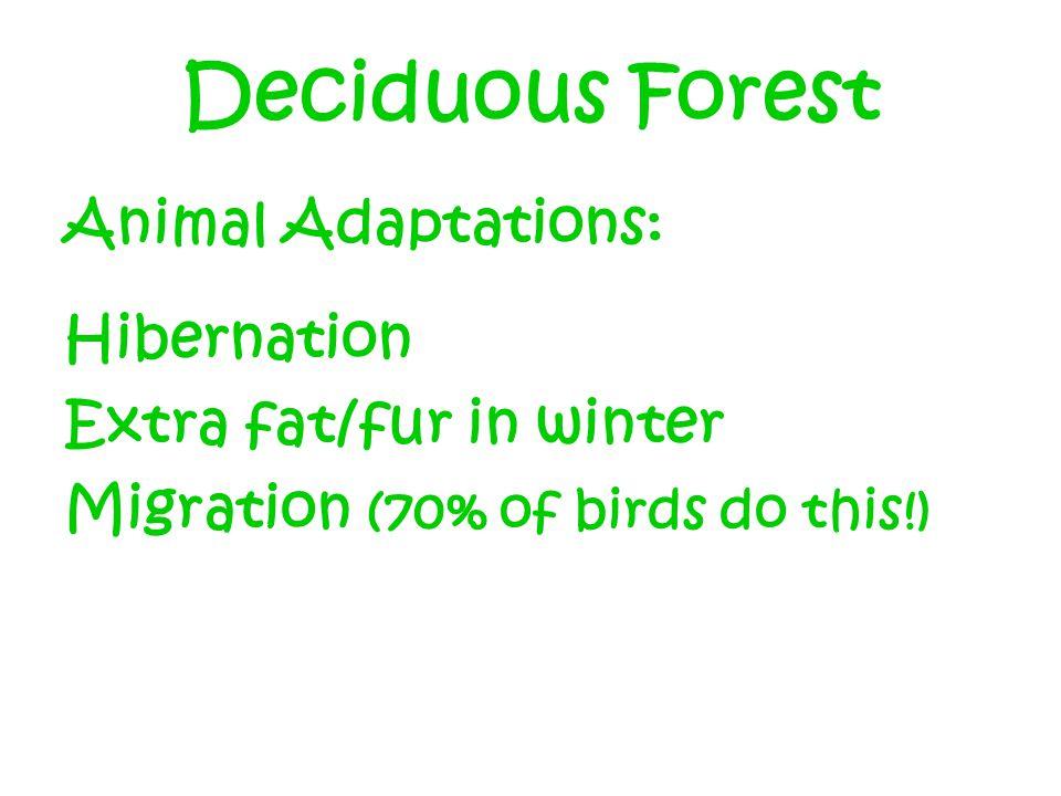 Deciduous Forest Animal Adaptations: Hibernation