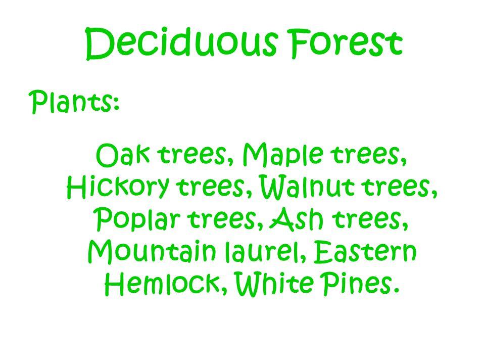 Deciduous Forest Plants: