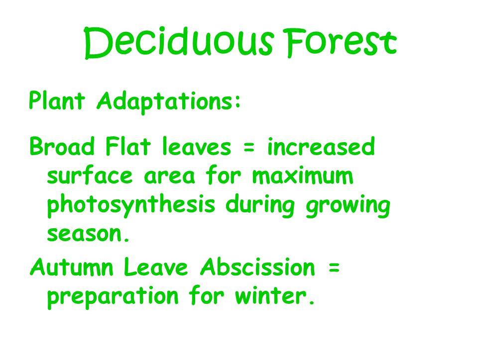 Deciduous Forest Plant Adaptations: