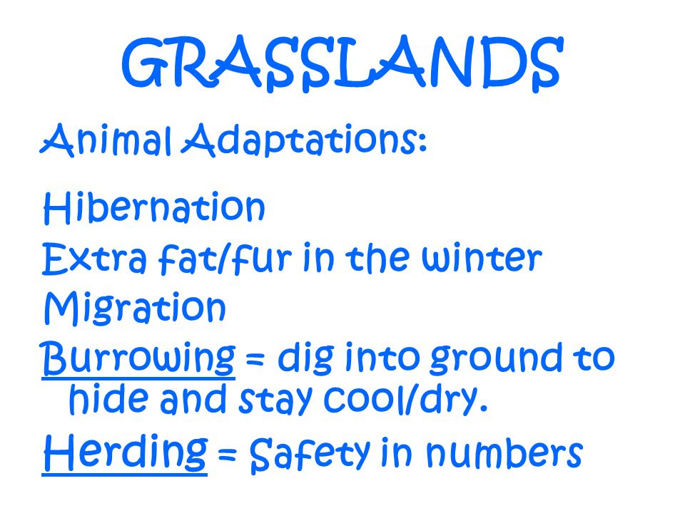 GRASSLANDS Herding = Safety in numbers Animal Adaptations: Hibernation