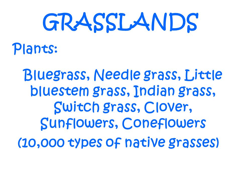 (10,000 types of native grasses)