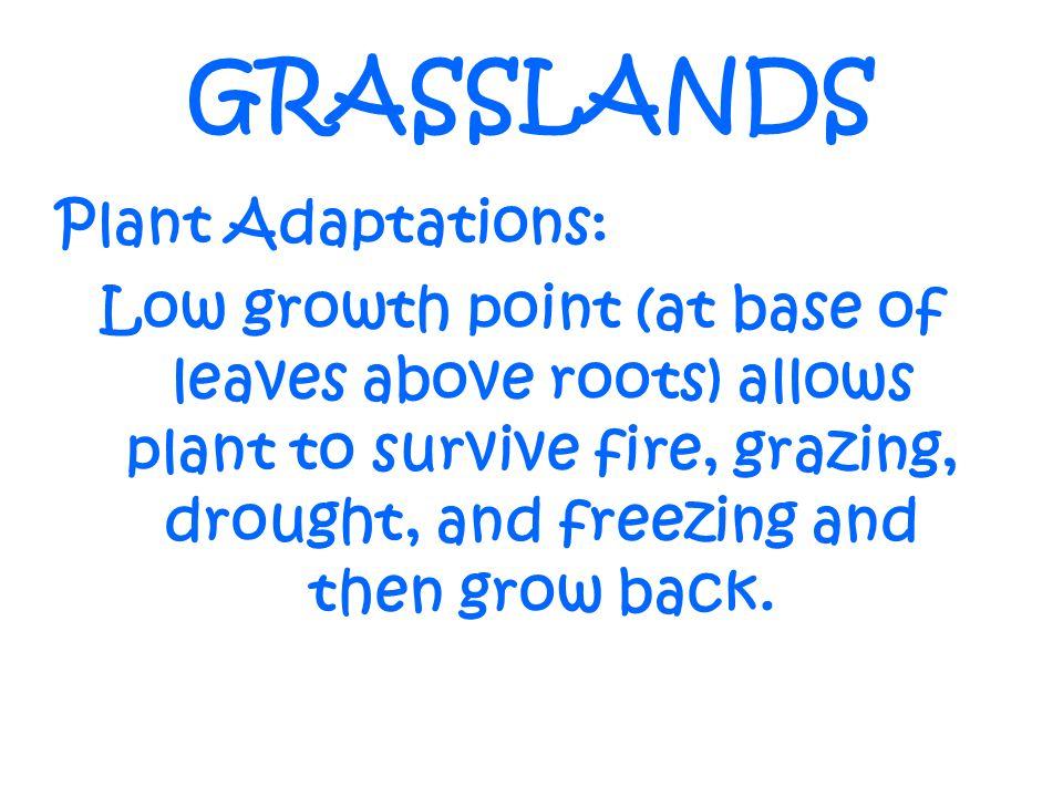 GRASSLANDS Plant Adaptations: