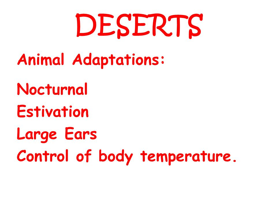 DESERTS Animal Adaptations: Nocturnal Estivation Large Ears