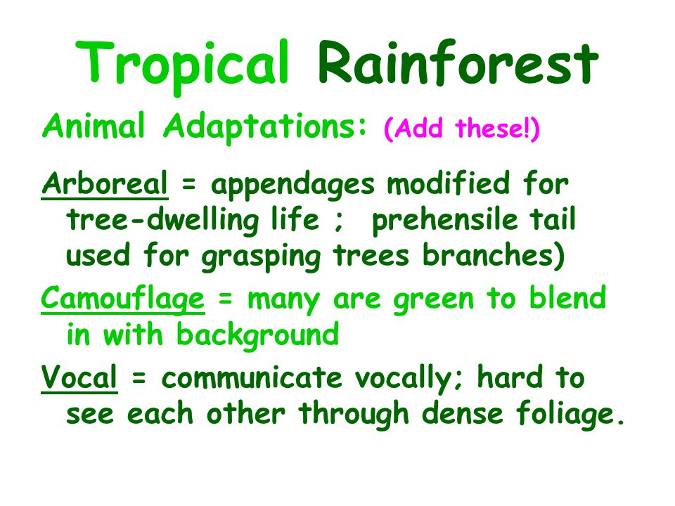 Tropical Rainforest Animal Adaptations: (Add these!)