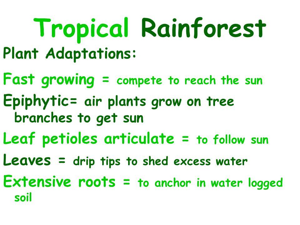 Tropical Rainforest Plant Adaptations: